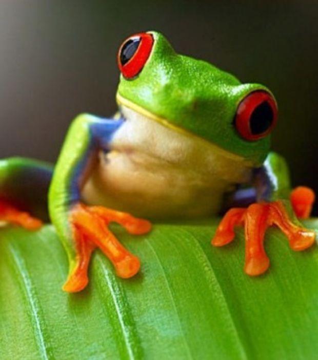 la fable de la grenouille fsdl fdration des syndicats dentaires libraux - Fauteuil Grenouille
